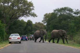 Elephants, Buffalos and other animals in the Kruger, South Africa